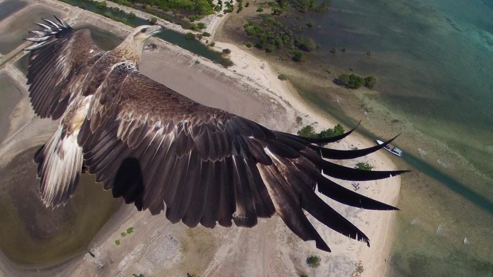 eagle-960x540[1]